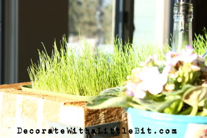 DecorateWithaLittleBit.com grass growing