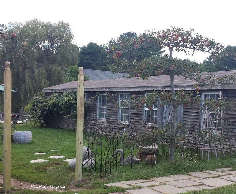 HometoCottage.com Snug Harbor Farm pollared tree
