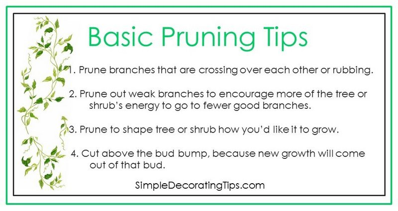 SimpleDecoratingTips.com basic pruning tips