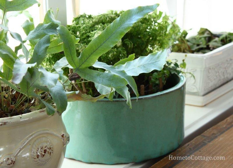 HometoCottage.com gardens
