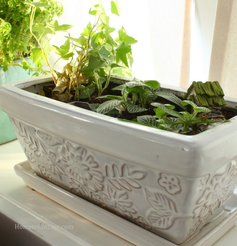 HometoCottage.com ivy with companion plants and miniature