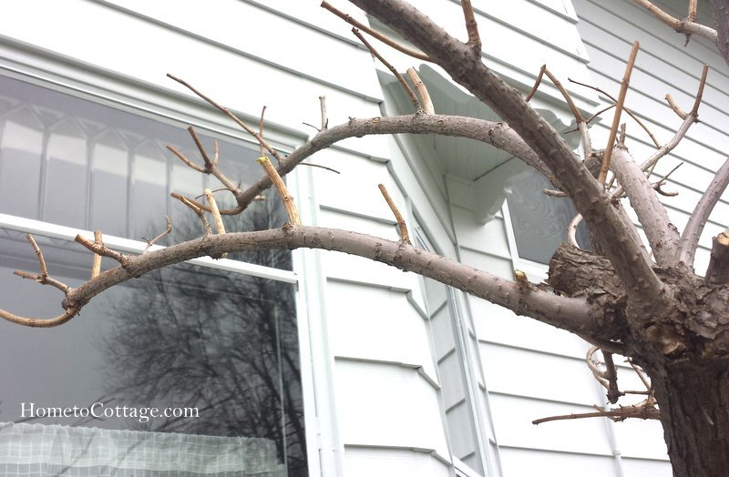 HometoCottage.com branches pruned