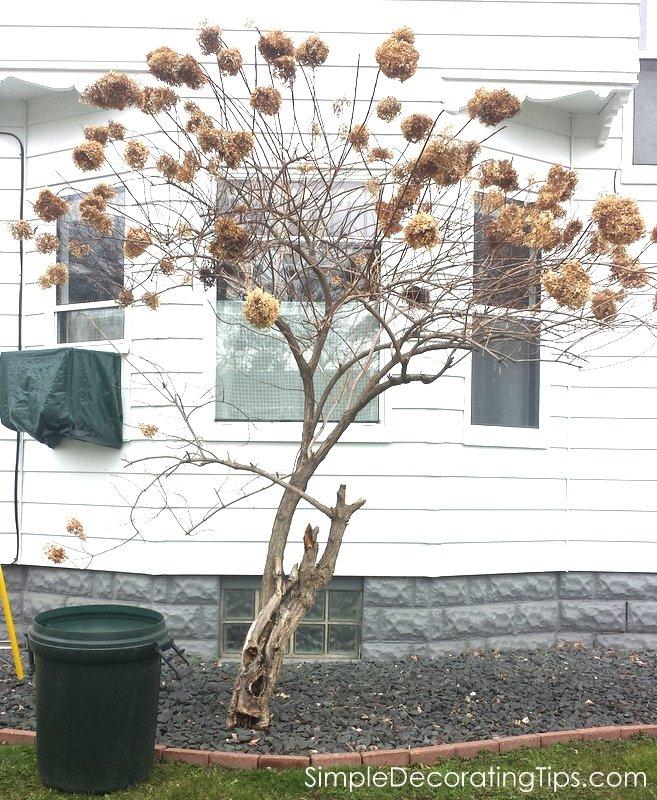 SimpleDecoratingTips.com before pruning