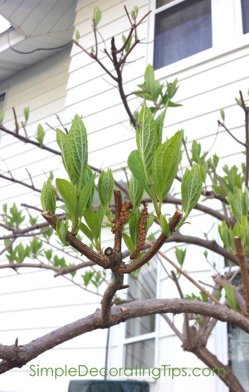 SimpleDecoratingTips.com buds now growing leaves