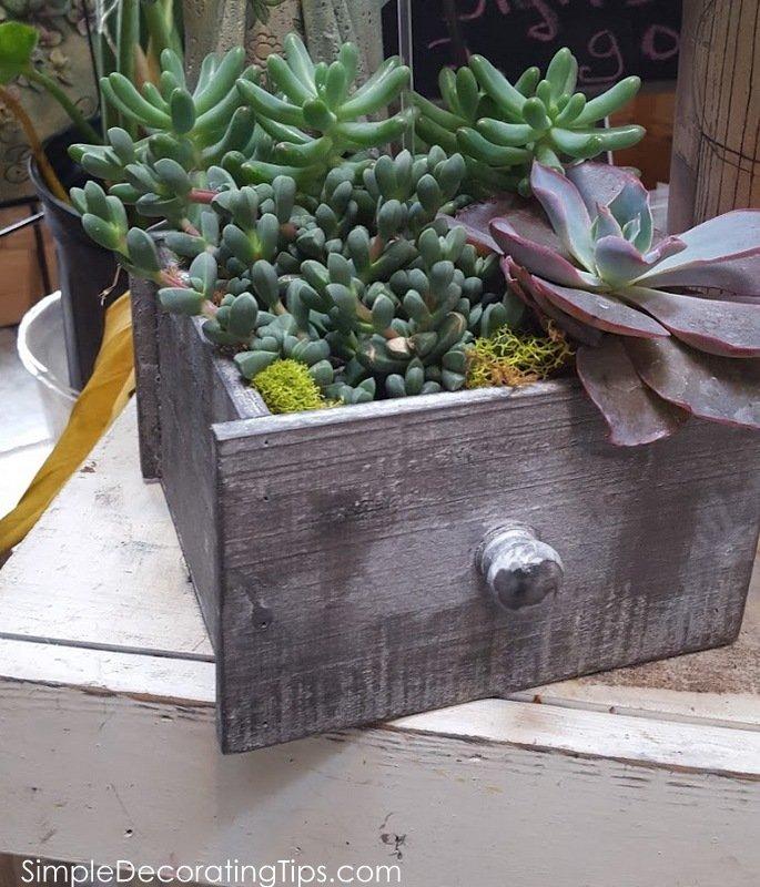 SimpleDecoratingTips.com succulents in large drawer