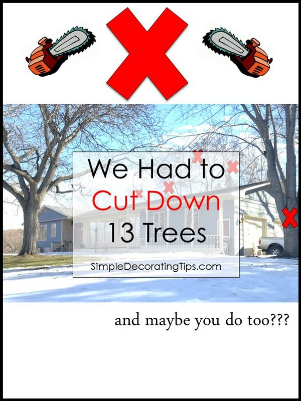 WE HAD TO CUT DOWN 13 TREES