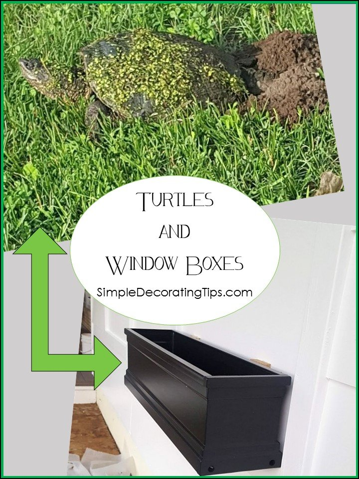TURTLES AND WINDOW BOXES - Simple Decorating Tips
