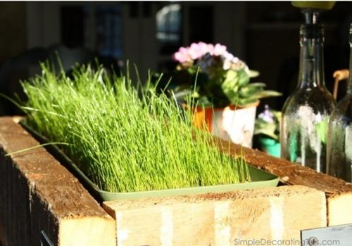Growing Grass inside