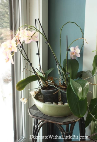 Humidity Tray for Orchids