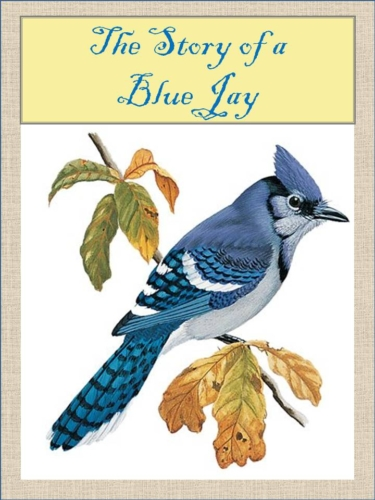 The-Story-of-a-Blue-Jay-Title-Page