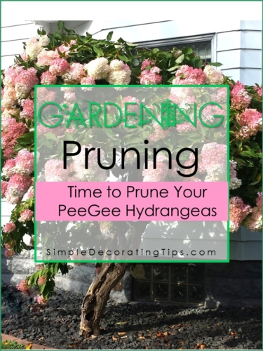 How to Prune a Peegee Hydrangea